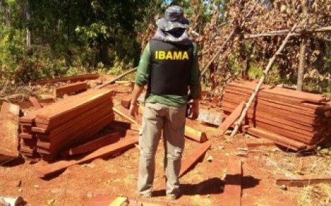 Ibama flagra madeira irregular em tora