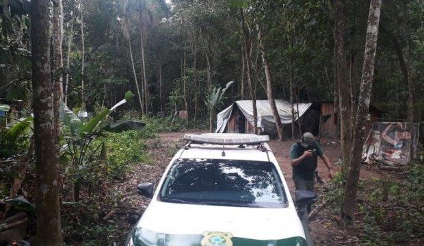 Doze pessoas são presas por extração de madeira em terra indígenas