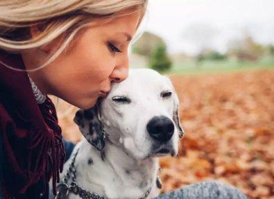 Reumatismo pode atingir cães e gatos