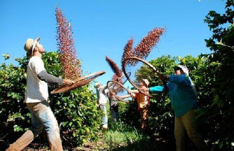 Mato Grosso produz café de qualidade e deve dobrar produção