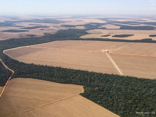 Mato Grosso reduz desmatamento na Amazônia em 22%