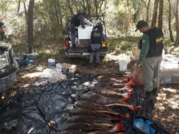 IBAMA apreende durante operação mais de meia tonelada de pescado irregular